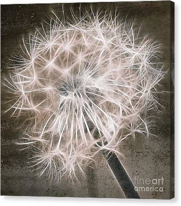 Dandelion In Brown Canvas Print by Aimelle