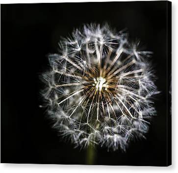 Canvas Print featuring the photograph Dandelion Seed by Darcy Michaelchuk