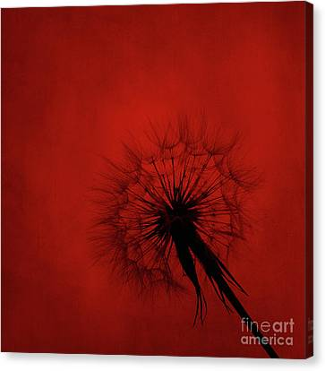 Dandelion Silhouette On Red Textured Background Canvas Print