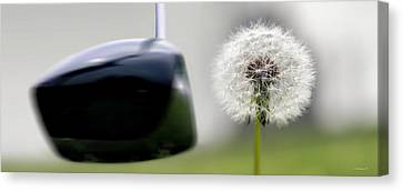 Dandelion Tee Canvas Print by Brian Wallace