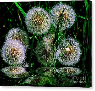 Canvas Print featuring the photograph Dandies  by Elfriede Fulda