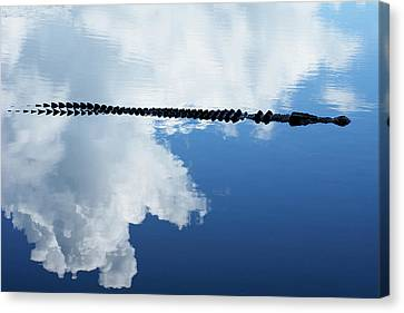 Canvas Print featuring the photograph Dangerous Reflection Saltwater Crocodile by Gary Crockett