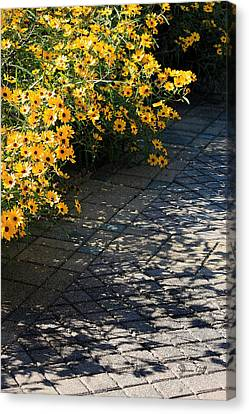 Dappled Light Canvas Print by Suzanne Gaff