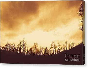 Dark Afternoon Woodland Canvas Print