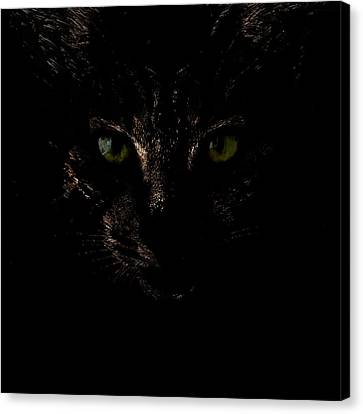 Dark Knight Canvas Print by Helga Novelli