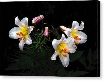 Canvas Print featuring the photograph Dark Day Bright Lilies by Byron Varvarigos