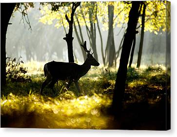 Dark Deer In Illuminated Forest Canvas Print by Roeselien Raimond