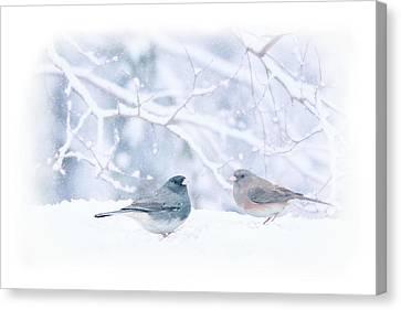 Dark-eyed-juncos In Snow Canvas Print by Barbara Hymer