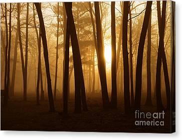 Dark Forest Canvas Print by Terri Gostola