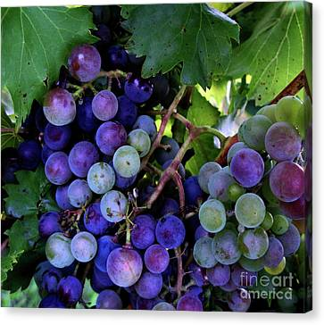 Canvas Print featuring the photograph Dark Grapes by Carol Sweetwood