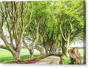 Dark Hedges, Game Of Thrones Canvas Print by Bob Cuthbert