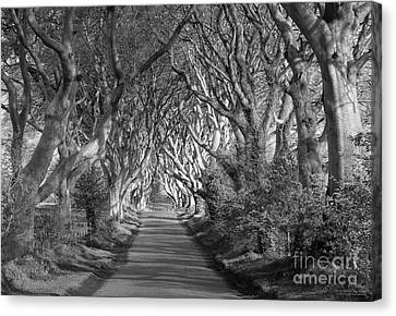 Dark Hedges Ireland Canvas Print by Patrick McGill