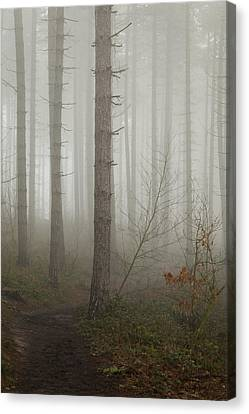 Early Spring Canvas Print - Dark Journey by Chris Dale