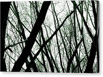 Dark Limbs Canvas Print by Steven Milner
