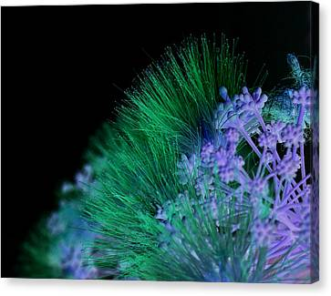 Dark Mimosa Canvas Print by James Granberry
