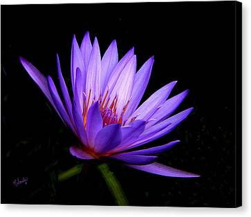 Dark Side Of The Purple Water Lily Canvas Print by Rosalie Scanlon