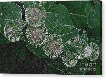 Canvas Print featuring the photograph Dark Thistles by Kathie Chicoine