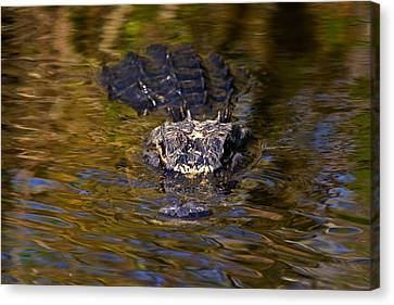 Dark Water Predator Canvas Print