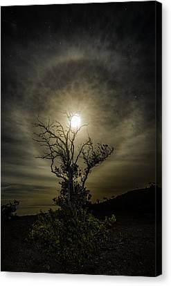 Darker Side Of Night  Canvas Print by Sean King