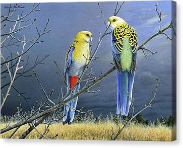 Darkness Before The Deluge - Pale-headed Rosellas Canvas Print