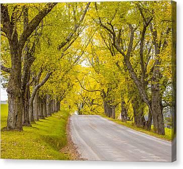Darling Hill Autumn Canvas Print