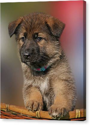 Canvas Print featuring the photograph Darling Puppy by Sandy Keeton