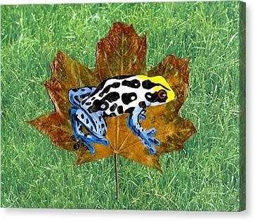 Dart Poison Frog Canvas Print