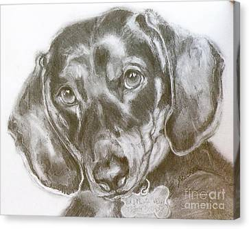 Daschund Pencil Drawing Canvas Print