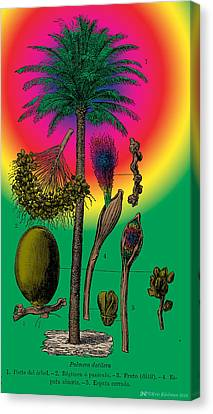 Date Palm Canvas Print by Eric Edelman
