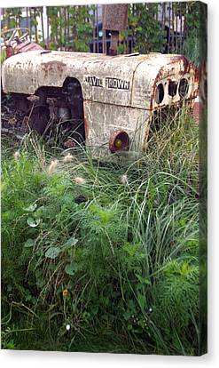 David Brown Grown Canvas Print by Jez C Self