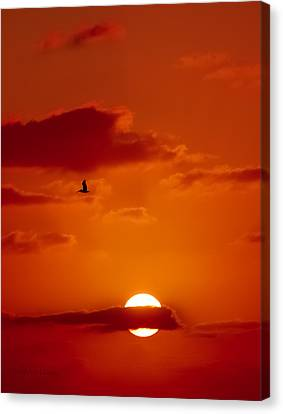 Dawn Flight Canvas Print by DigiArt Diaries by Vicky B Fuller