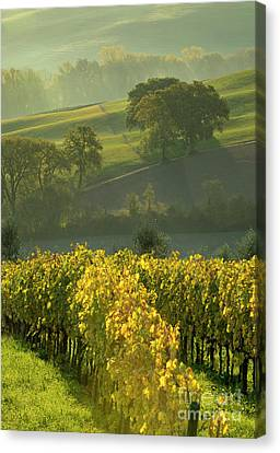 Dawn In Tuscany Canvas Print by Brian Jannsen