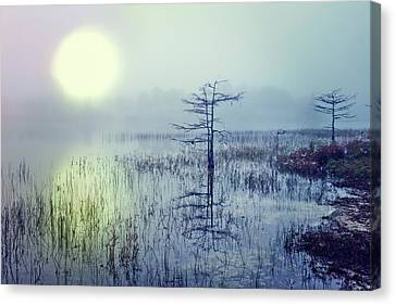 Dawn Over The Glade Canvas Print by Debra and Dave Vanderlaan