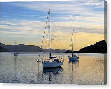 Dawn Picton New Zealand Canvas Print by Barry Culling