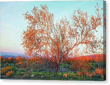 Canvas Print featuring the photograph Dawn's First Light At Joshua Tree National Park by Ram Vasudev