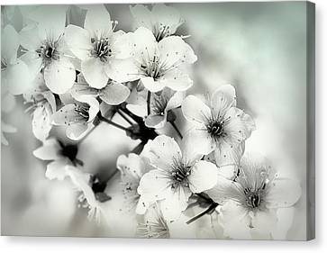 Canvas Print featuring the photograph Day Dreams by Darlene Kwiatkowski