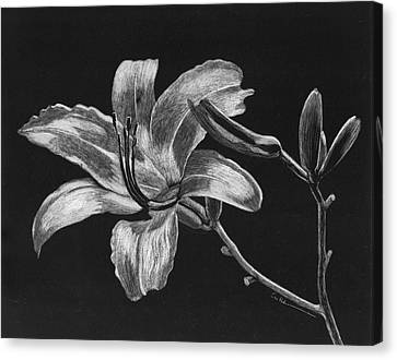 Day Lily Canvas Print by Diane Cutter