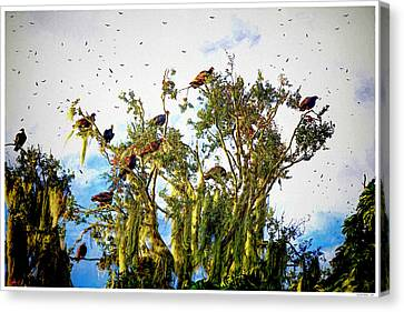 Blue Grapes Canvas Print - Day Of The Vultures by Rogermike Wilson