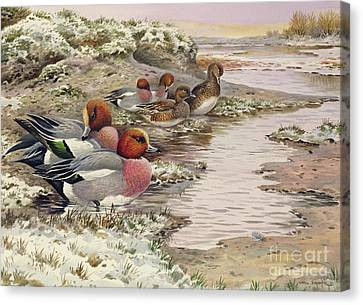 Daybreak On The Washes  Wigeon Canvas Print