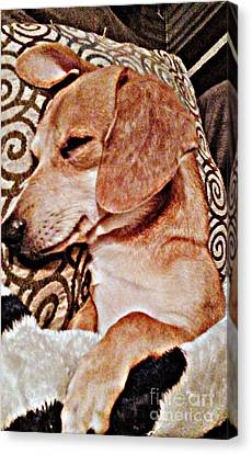 Daydreaming Dachshund Doggie In/ Puppy Slumber Canvas Print by PrettTea Art Gallery By Teaya Simms