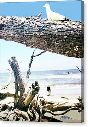 Canvas Print - Daydreams And Driftwood by Seth Weaver