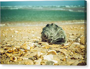 Daydreams On The Shore Nature Photograph Canvas Print by Melissa Fague
