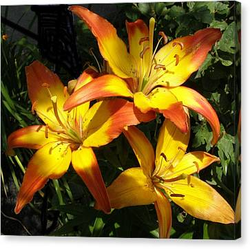Daylilies Dressed In Their Best Canvas Print by Jeanette Oberholtzer