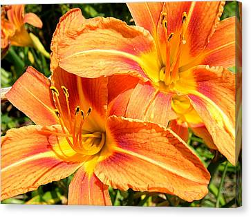 Daylillies In Bloom Canvas Print by Margaret G Calenda