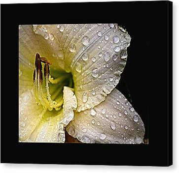 Daylilly 1 Canvas Print by John Feiser
