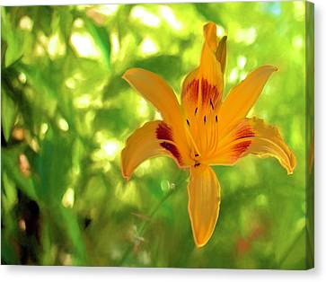 Daylily Canvas Print by Charles Ables