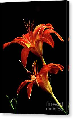 Canvas Print featuring the photograph Daylily Double by Douglas Stucky
