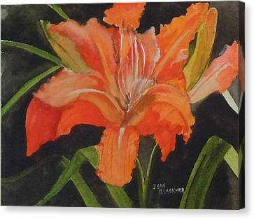 Daylily Study IIi Canvas Print by Jean Blackmer