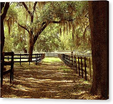 Brown Ranch Trail Canvas Print - Days Gone By by Adele Moscaritolo