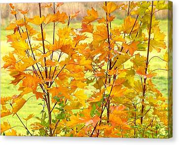 Canvas Print - Days Of Autumn 1 by Will Borden